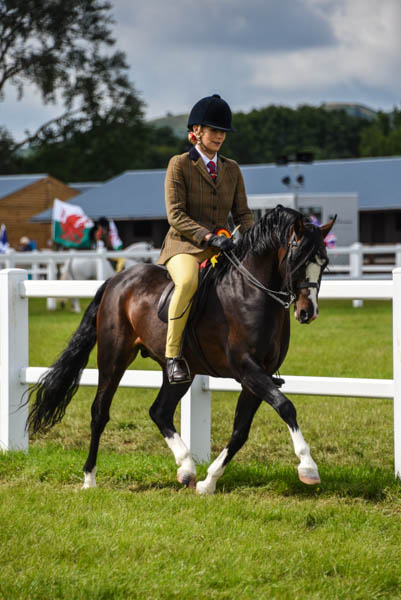 National Welsh17 HOYS AM 525-2512